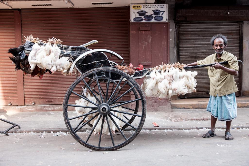 Hühner dürfen Rikscka fahren