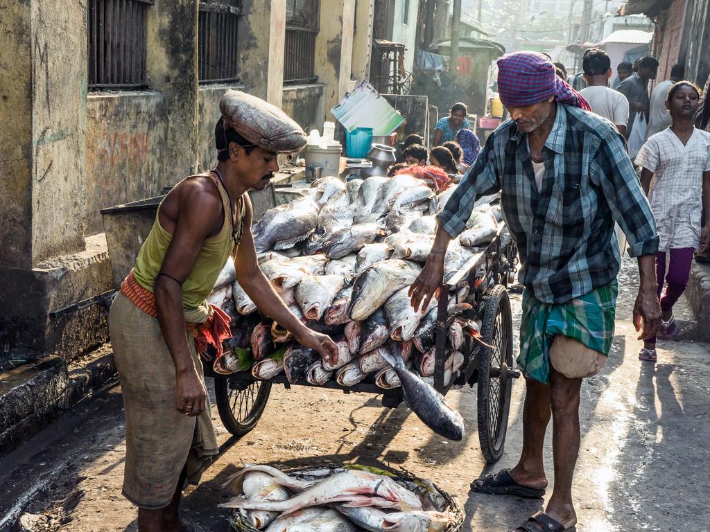 Fischtransport auf indisch